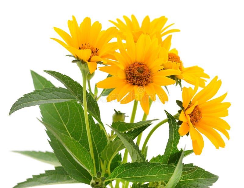 Cinque fiori gialli immagini stock