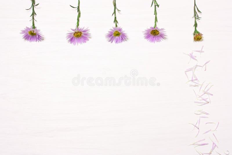 Cinque fiori su un fondo bianco immagine stock
