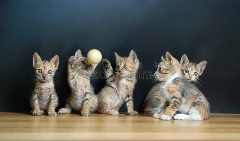 Cinque gatti svegli immagini stock