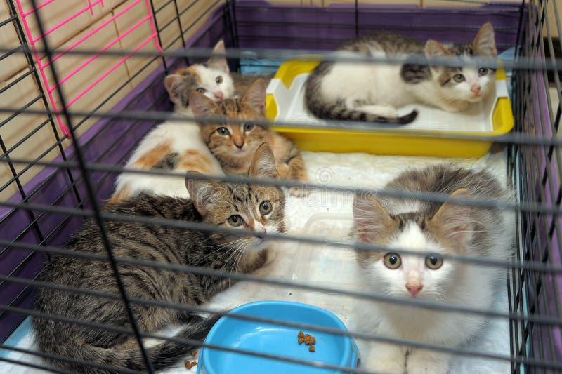 Cinque gattini fotografia stock