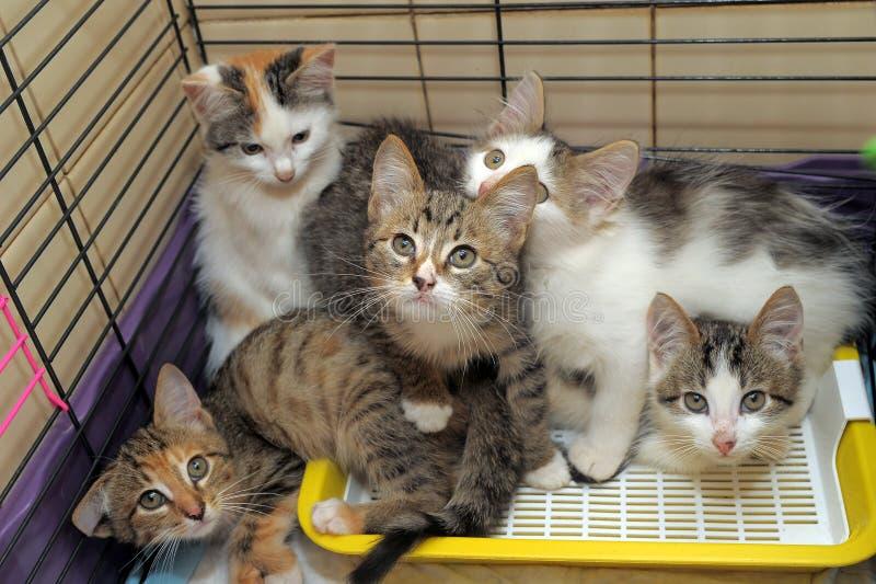 Cinque gattini immagini stock