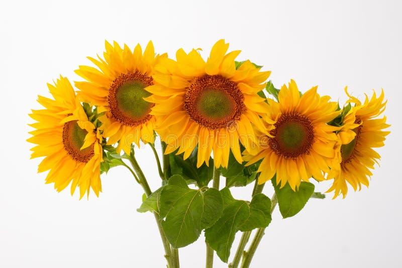 Download Cinque girasoli gialli fotografia stock. Immagine di flora - 56881798