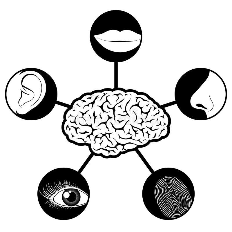 Cinque icone di sensi gestite dal cervello illustrazione di stock