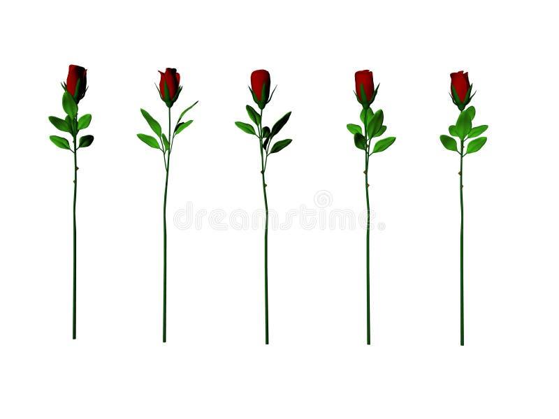 Cinque rose illustrazione di stock