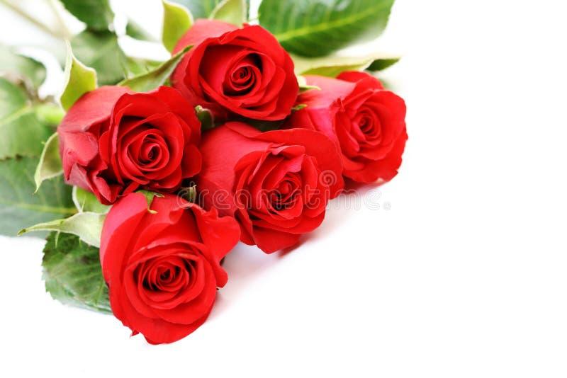 Cinque rose fotografia stock