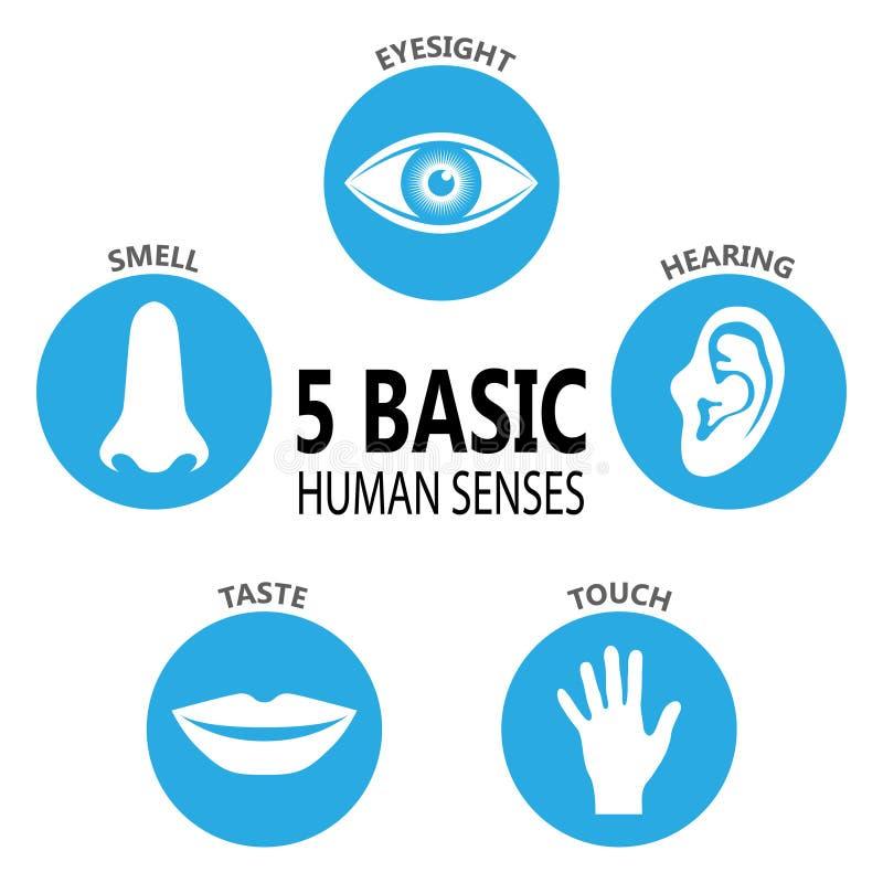 Cinque sensi umani royalty illustrazione gratis