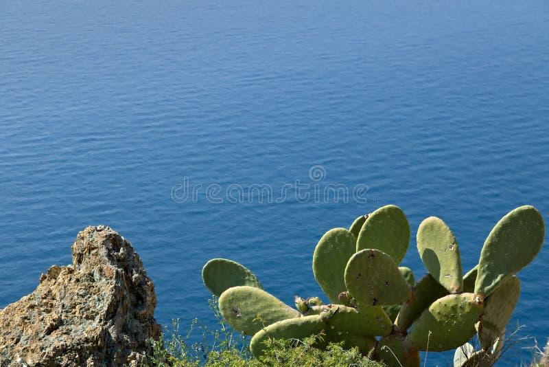 Cinque Terre, Лигурия, Италия Opuntia завода кактуса колючей груши стоковое фото rf