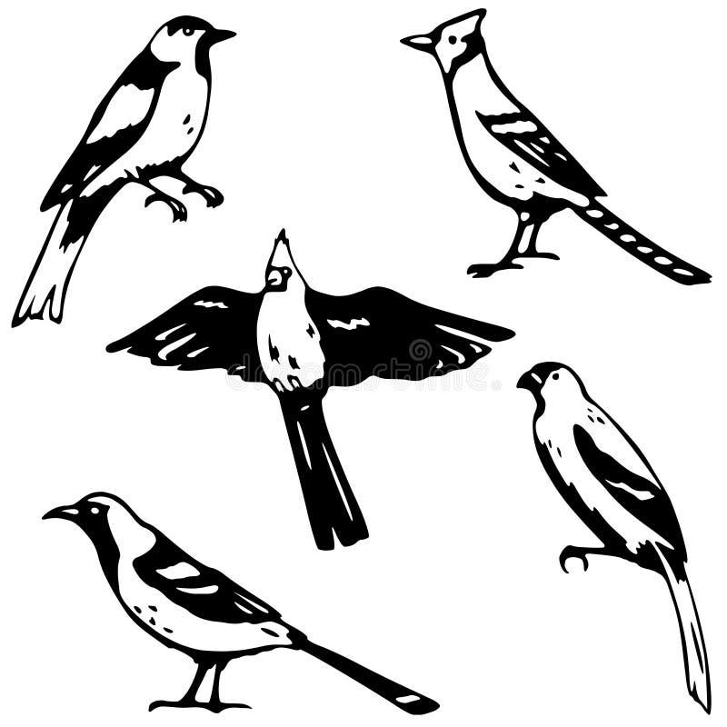 Cinque uccelli canori royalty illustrazione gratis