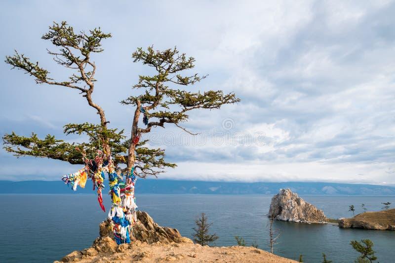 Cintas coloridas en el árbol en el lago Baikal en Siberia fotografía de archivo libre de regalías