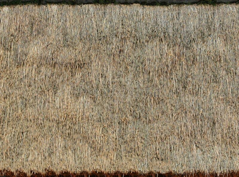 Cinza da grama seca que encontra-se no telhado Textura ou fundo fotos de stock