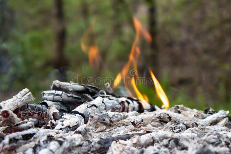Cinza de carvão e de madeira fotografia de stock
