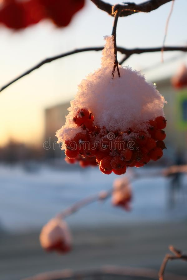 cinza de montanha na neve fotografia de stock royalty free