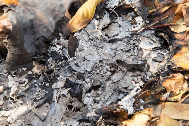 Cinza do burning das folhas imagens de stock royalty free