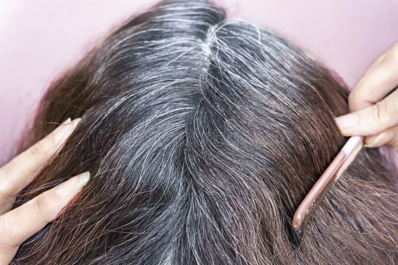 Cinza indo A mulher mostra-lhe raizes cinzentas do cabelo imagem de stock