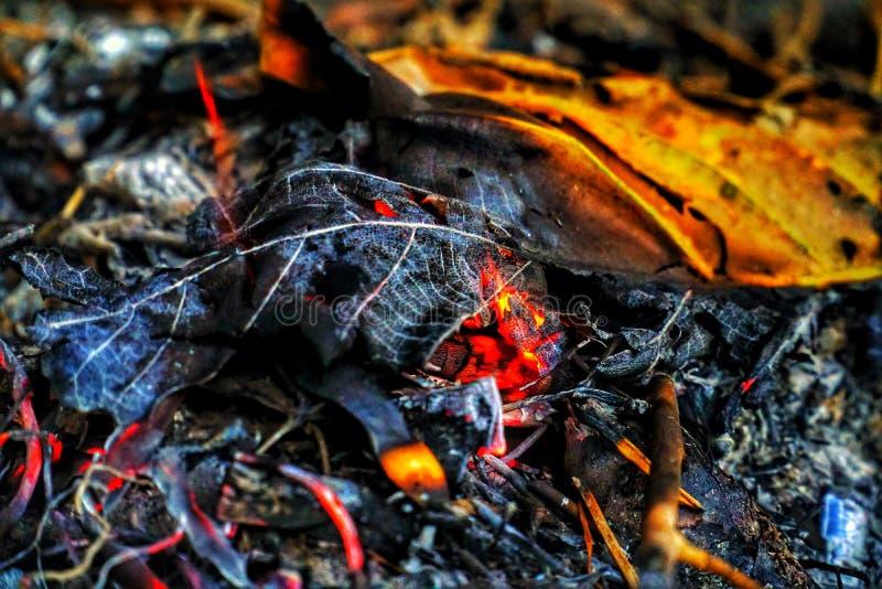 Cinzas no fogo imagens de stock