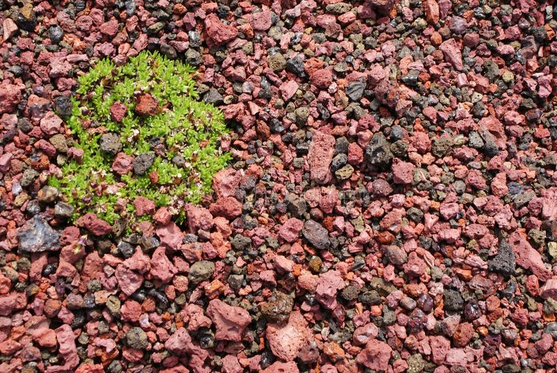 Cinzas vermelhas com planta verde imagem de stock royalty free
