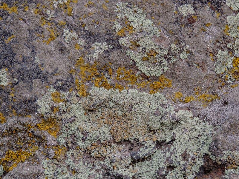 Cinzento, verde, preto, líquene na rocha, combinação simbiótico de um fungo com algas ou bactéria, fim acima, macro na queda no Y fotos de stock