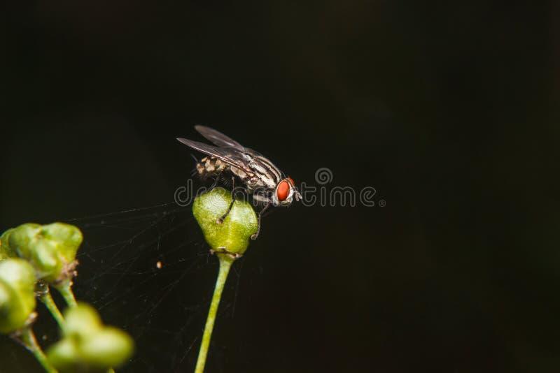 Cios komarnica zdjęcie stock