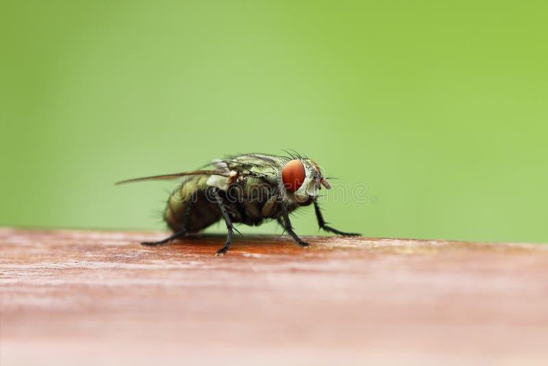 cios komarnica na drewnianej desce z plamy zieleni tłem obraz royalty free