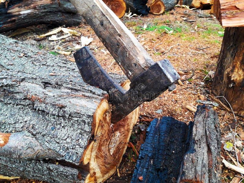 Cioska Wtykająca w drewnie obraz stock