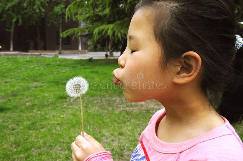 ciosu dandelion dziewczyna obrazy stock
