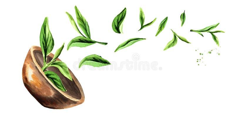 Ciotola con le foglie di tè verdi Illustrazione orizzontale disegnata a mano dell'acquerello, isolata su fondo bianco illustrazione di stock