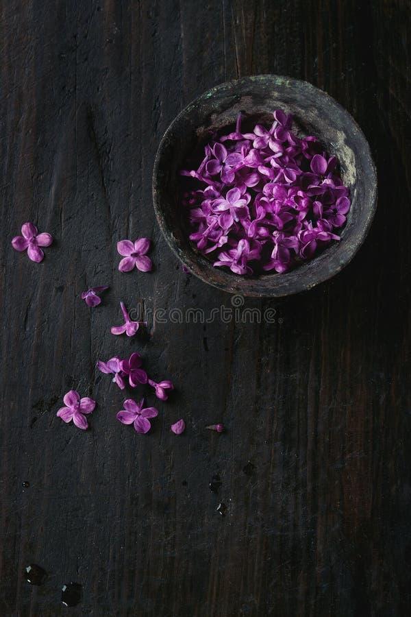 Ciotola di fiori lilla fotografia stock libera da diritti