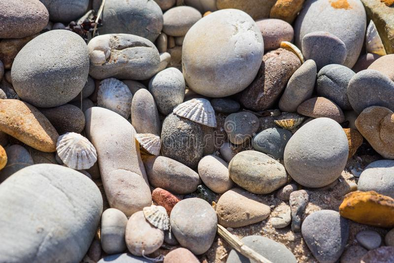 Ciottoli e coperture della patella su una spiaggia fotografia stock