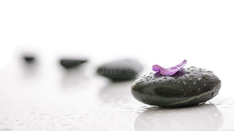 Ciottoli neri e petalo viola con le gocce di acqua fotografia stock