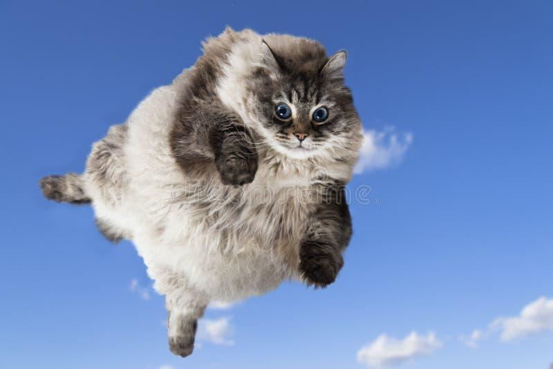 Cipa gruby kot levitate w niebieskim niebie fotografia royalty free