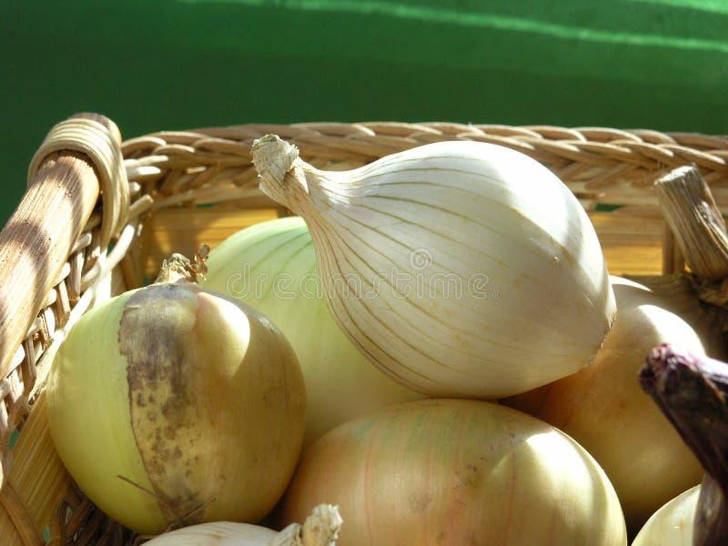 Download Cipolla immagine stock. Immagine di sapore, giardinaggio - 204939