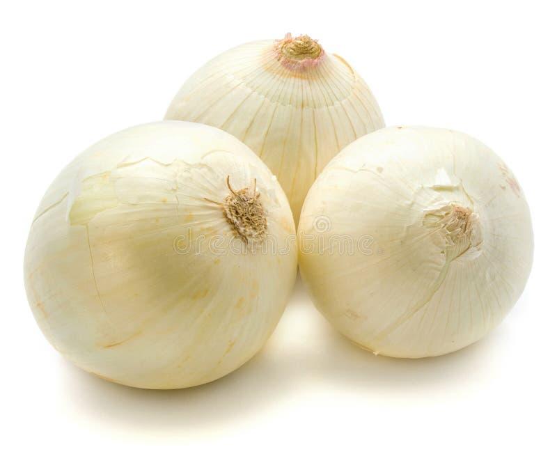 Cipolla bianca immagine stock