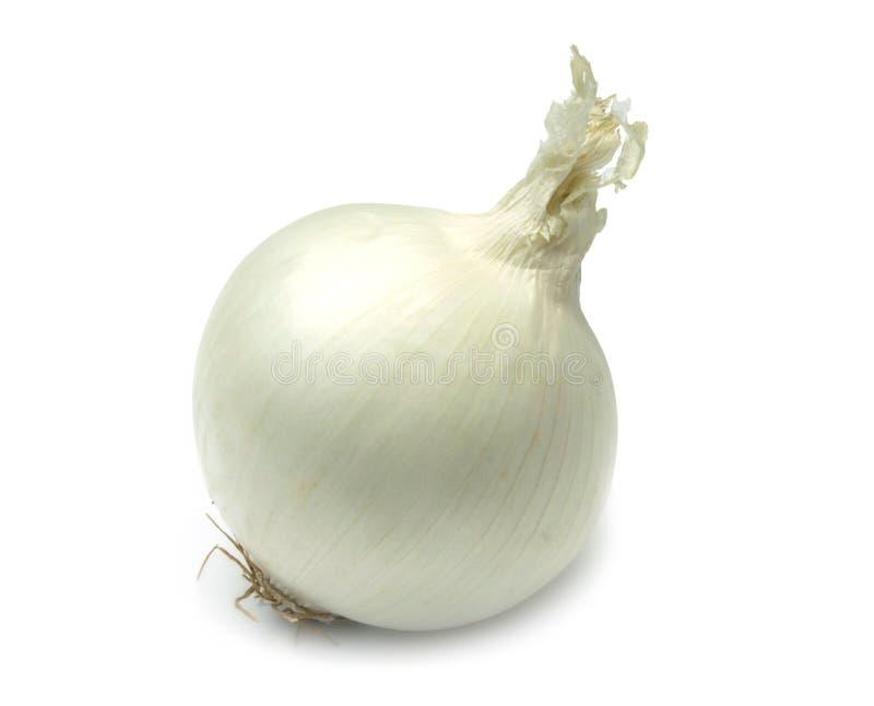 Cipolla bianca fotografia stock