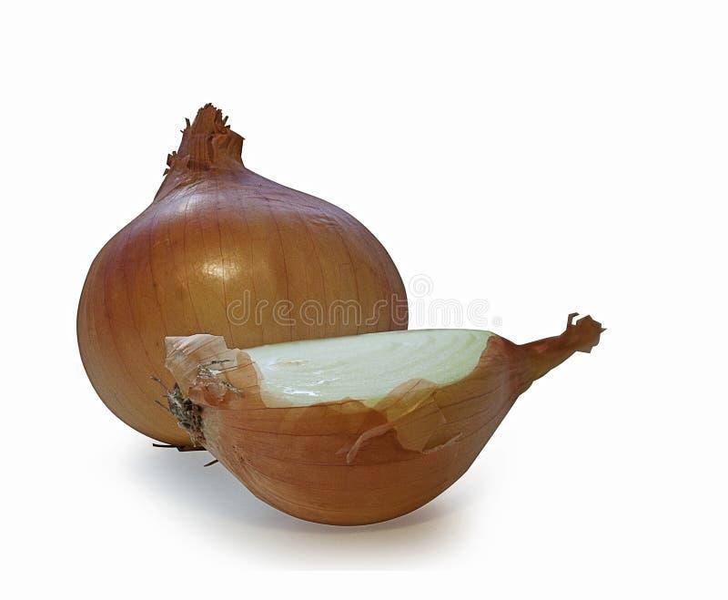 Cipolla, cima, vista, bianco, fondo, cipolle, giallo, fresco, sane, gruppo, organico, di verdure, ingrediente, maturo, stagione fotografie stock