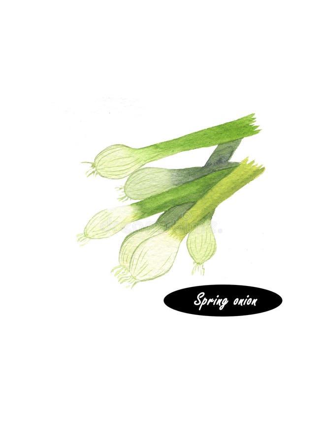 Cipolla di inverno verde dell'acquerello su fondo bianco illustrazione vettoriale