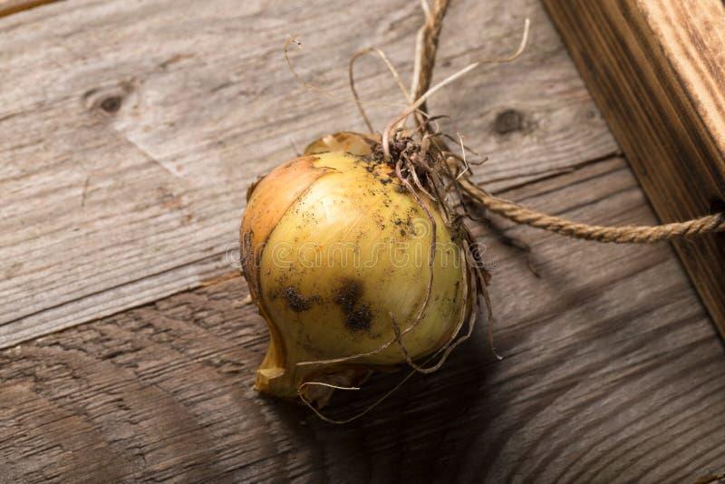 Cipolla fresca in una scatola rustica bruciata di struttura per fondo Bordo di legno stagionato approssimativo fotografie stock libere da diritti