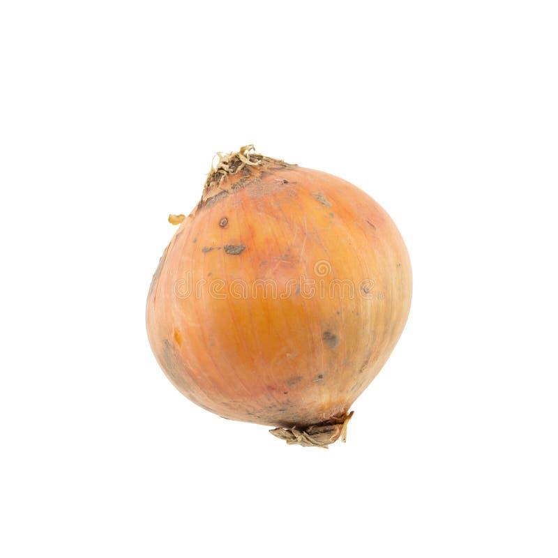Cipolla isolata su bianco immagine stock