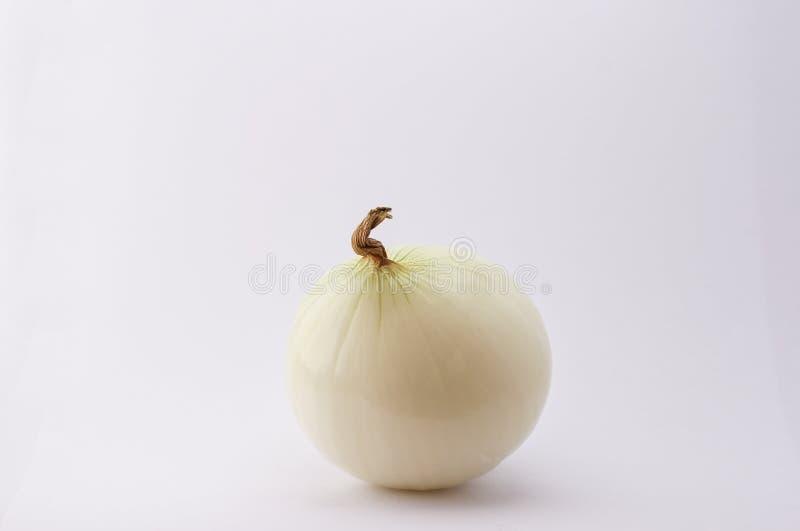 Cipolla isolata su fondo bianco fotografia stock
