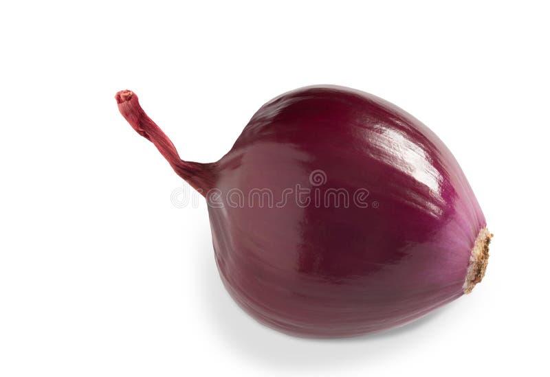 Cipolla rossa isolata su fondo bianco Chiusura immagini stock libere da diritti