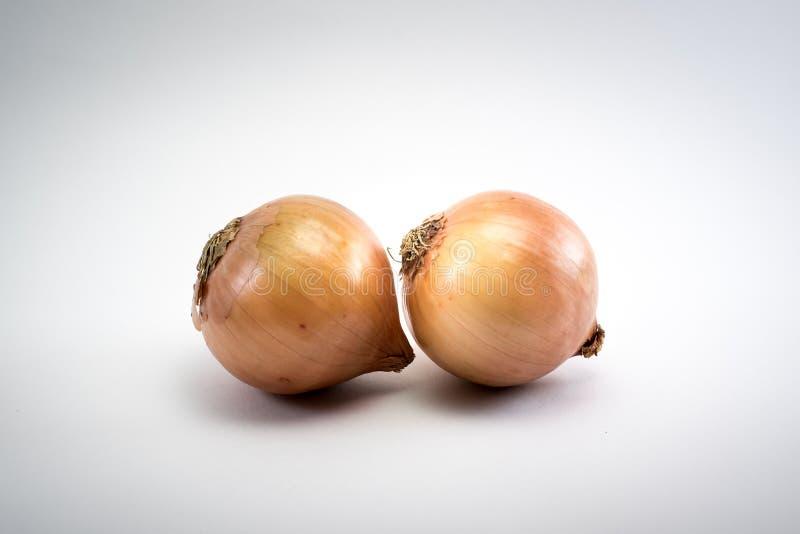 Cipolla su fondo bianco fotografia stock