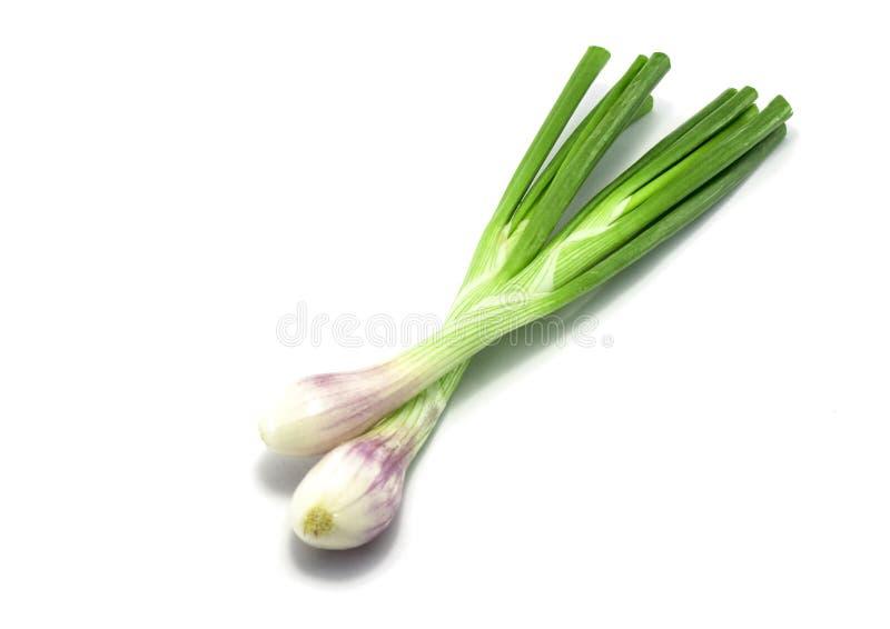 Cipolla verde isolata sullo sfondo bianco fotografie stock libere da diritti