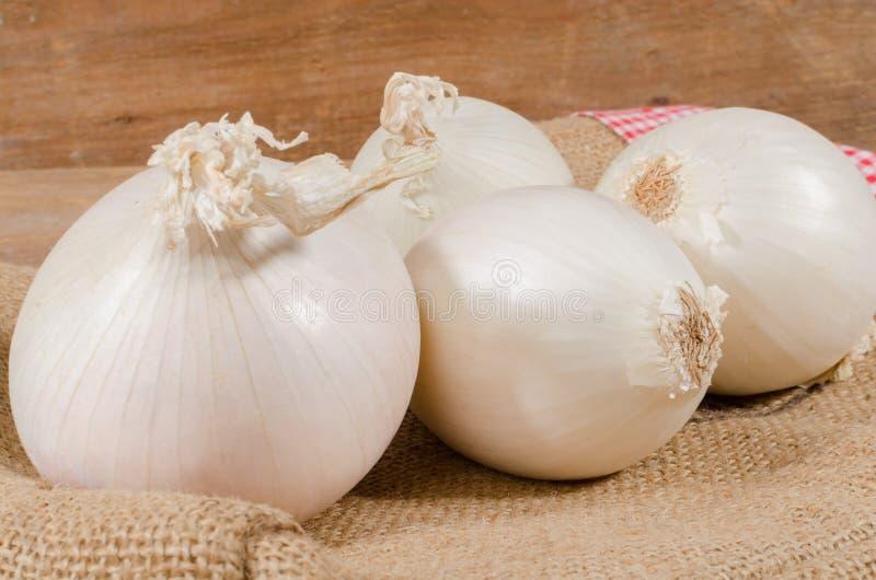 Download Cipolle bianche fotografia stock. Immagine di alimento - 56889584