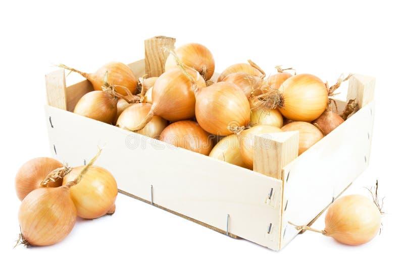 Cipolle in casella fotografia stock