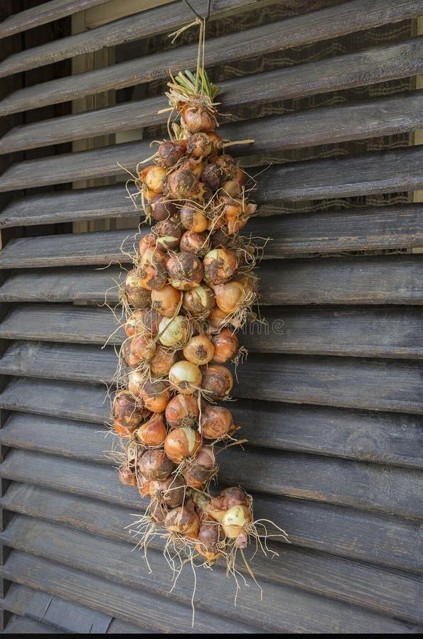 Cipolle di Bunche immagini stock
