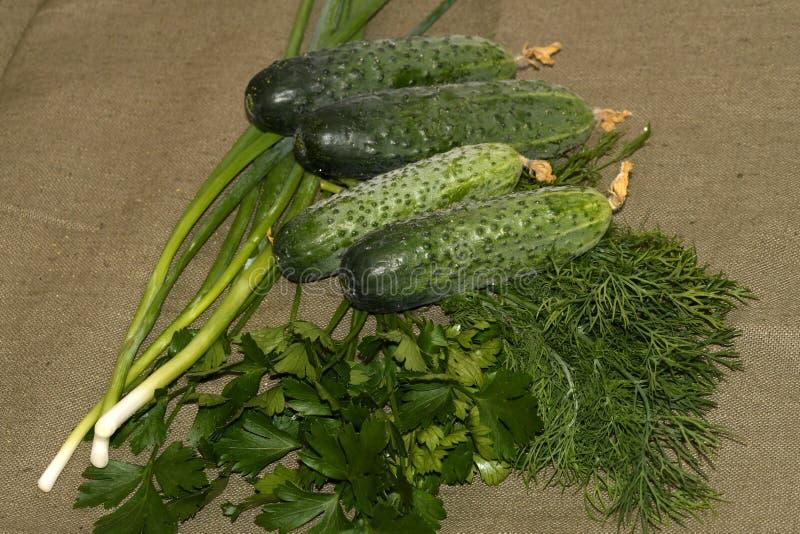 Cipolle e prezzemolo dei cetrioli con aneto sulla tovaglia immagine stock
