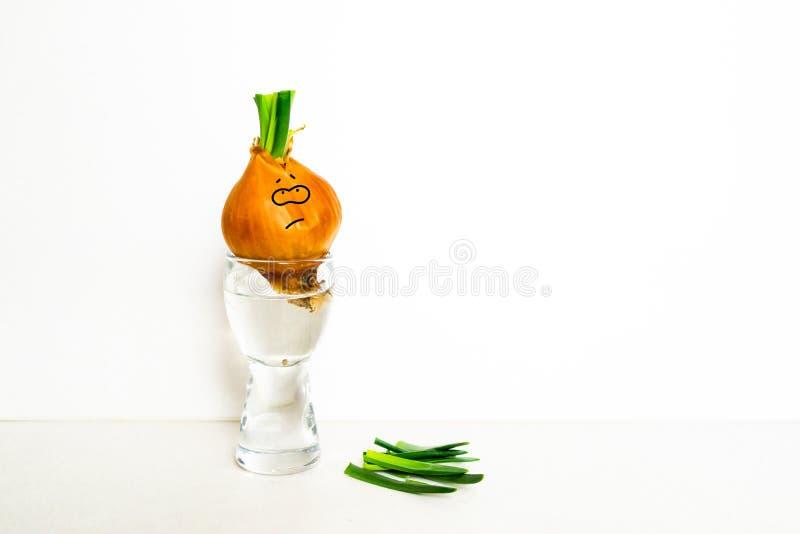 Cipolle germogliate fotografia stock libera da diritti