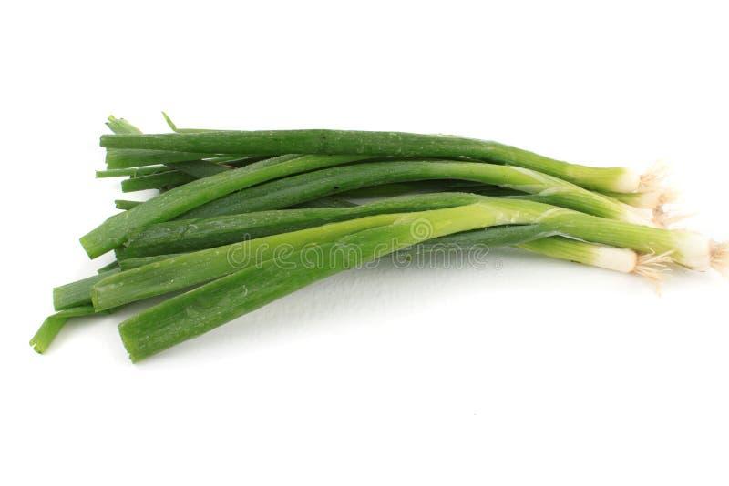 Cipolle verdi fotografia stock