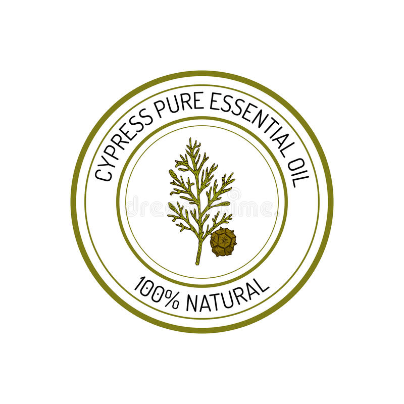 Cipres, etherische olieetiket, aromatische plant royalty-vrije illustratie