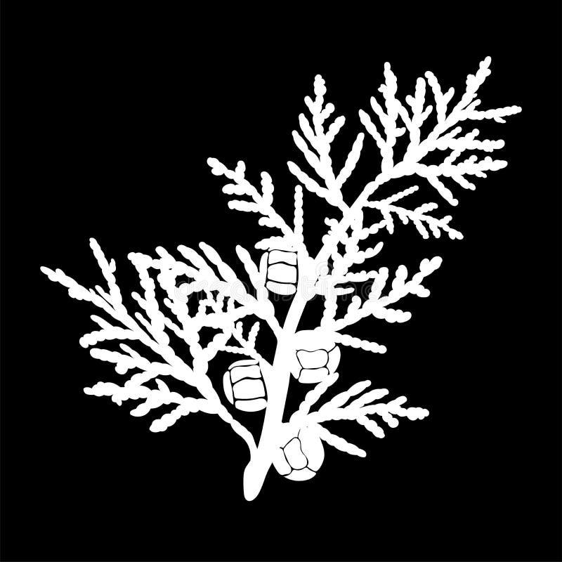 Cipres geïsoleerd embleempictogram Wit silhouet Vector vector illustratie