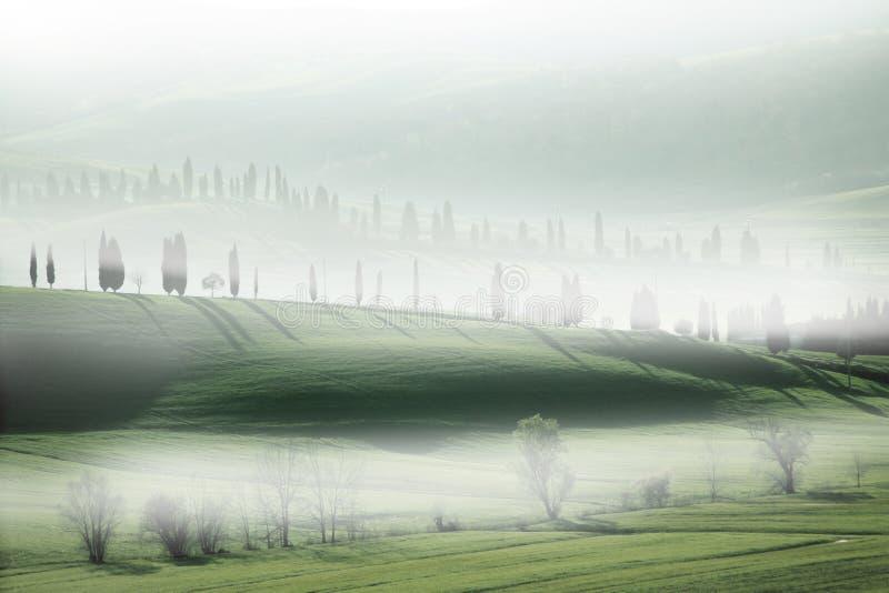 Cipresbomen in de Mist stock fotografie